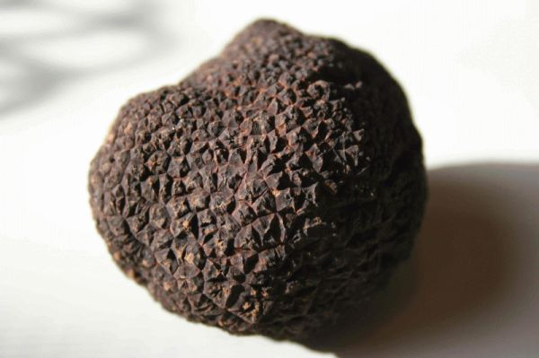 Image from Australian Truffle Growers Association