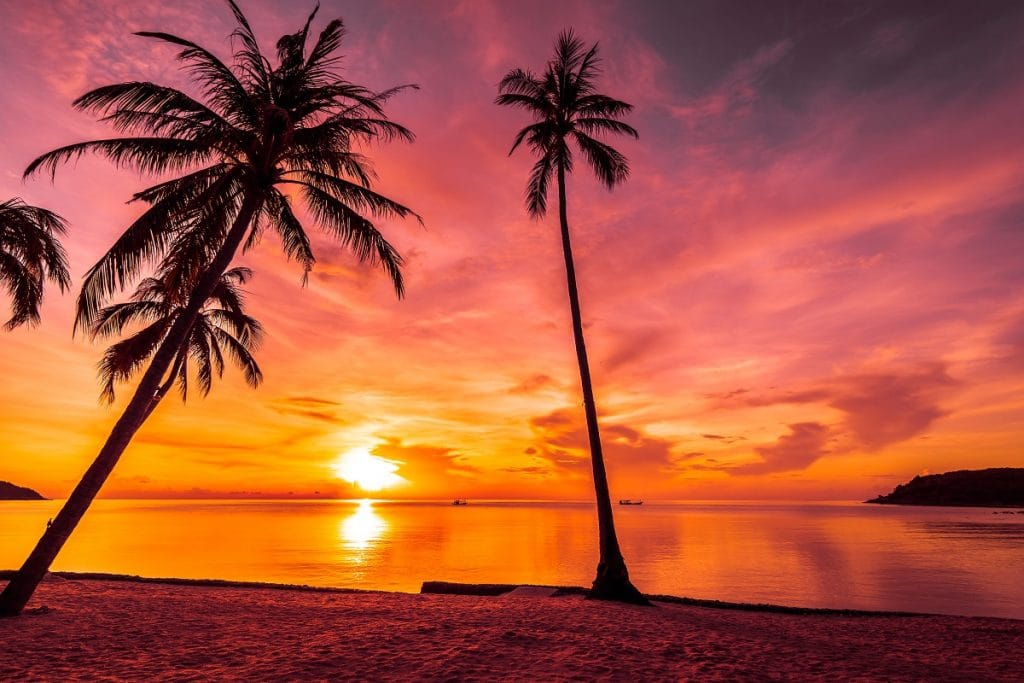 At sunset time on the tropical beach and sea with coconut palm t